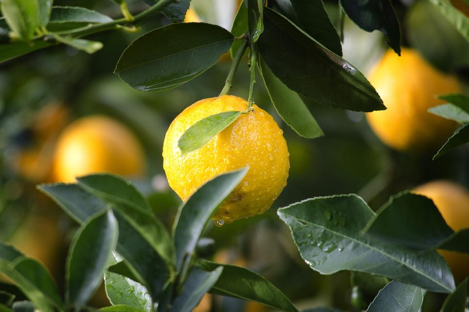 Warum Zitrone gesund ist